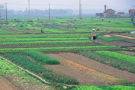sang tên giấy chứng nhận quyền sử dụng đất nông nghiệp